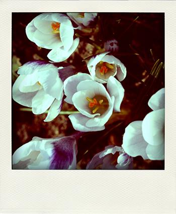 garden-colours1